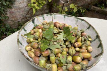 bowl of acorns and oak leaves