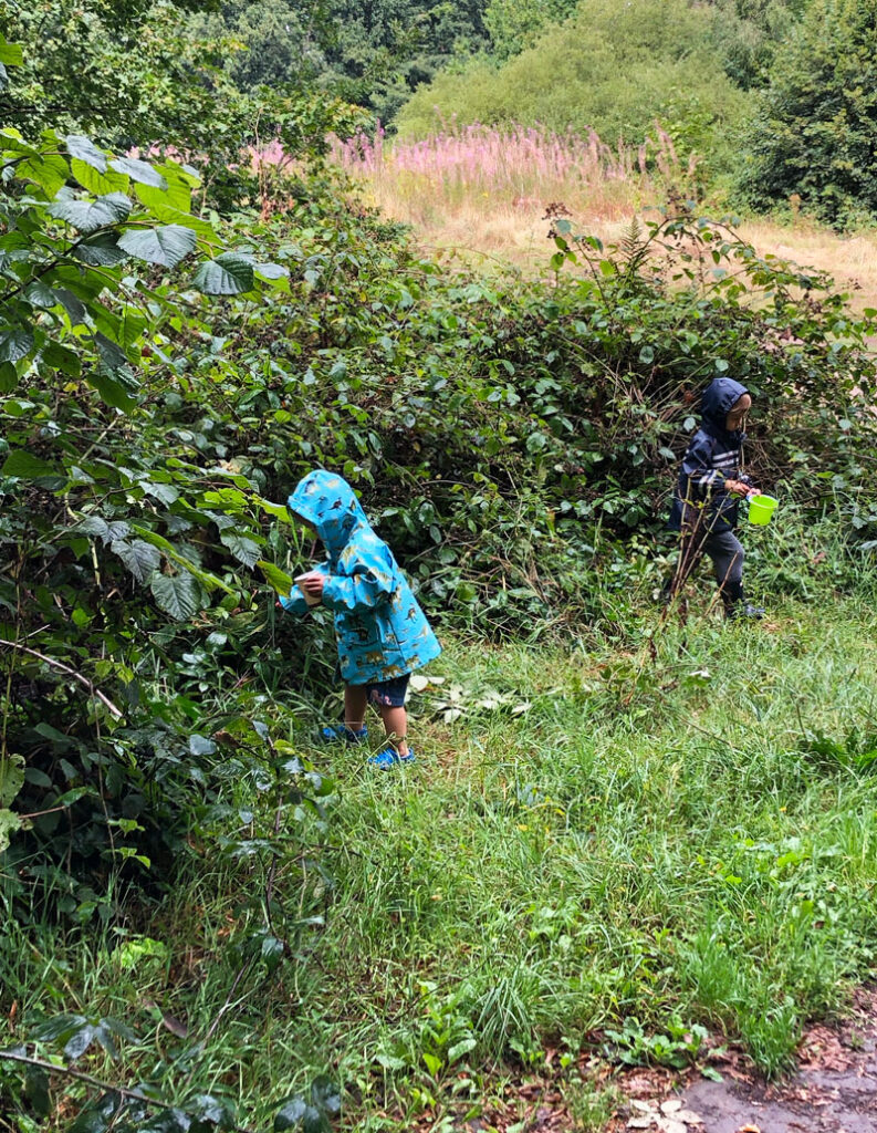 Child's hand picking wild blackberries