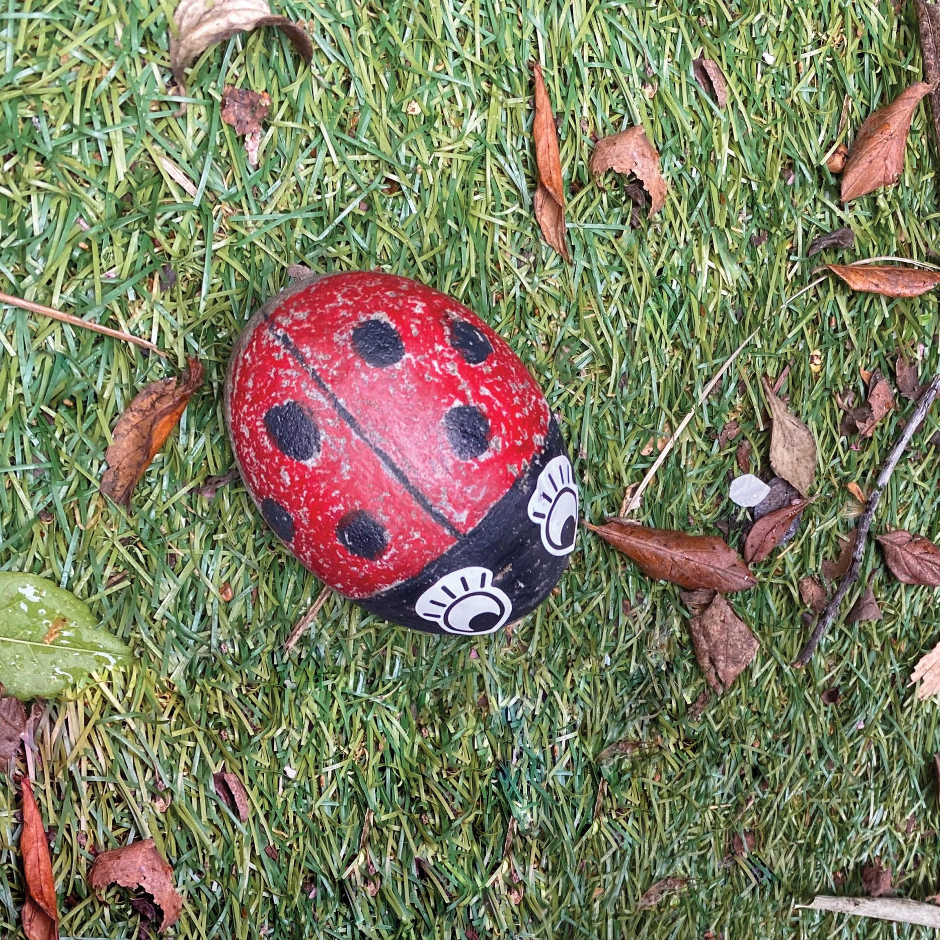 ladybird pebble