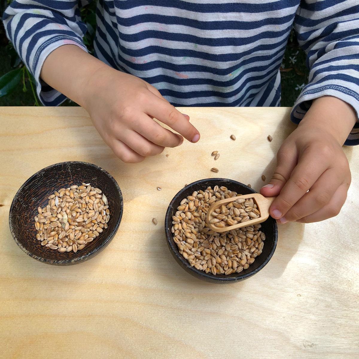 spooning wheat
